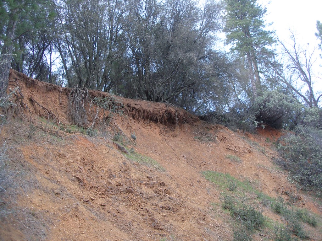 Native tree and shrub removal on steep slopes may cost you your property!! Slope is now receding TOWARDS the home. width=